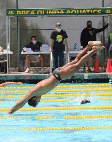Joshua Santos, senior, dives into the BOHS pool during the Wildcats warm-up for the May 12 meet against Villa Park High School. The Wildcats beat the Spartans in all five levels.